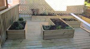 The Roof Top Rear Deck and Herb Garden Will Offer Seating in the Near Future