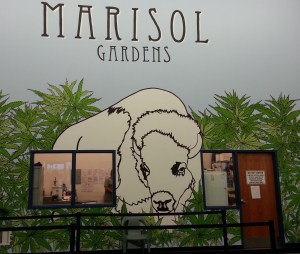 Marisol Gardens, Pueblo Colorado, recreational marijuana outlet