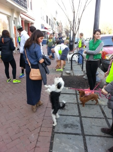 Last Saturday's dog adoption at Howl to the Chief on Barracks Row