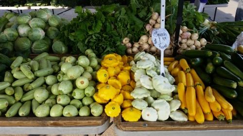 Squash - Zucchini, Pattycake, and Yellow