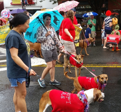 The Rural Dog Rescuers Marched - hoping, perhaps for adoptions (www.ruraldogrescue.com)