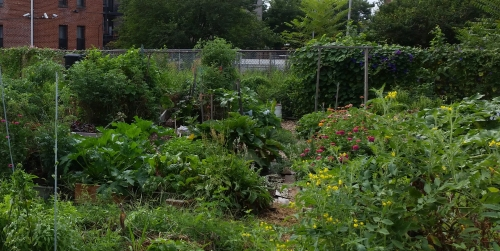 The lushness of King's Court Garden on a drowsy, bee filled morning in mid-August.